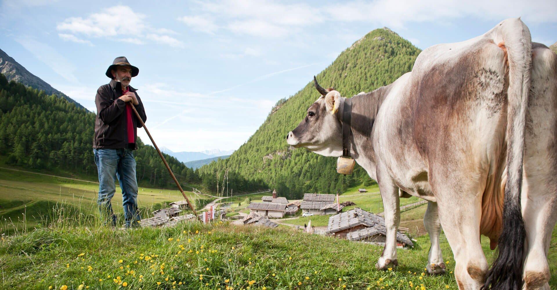 almenregion-gitschberg-jochtal